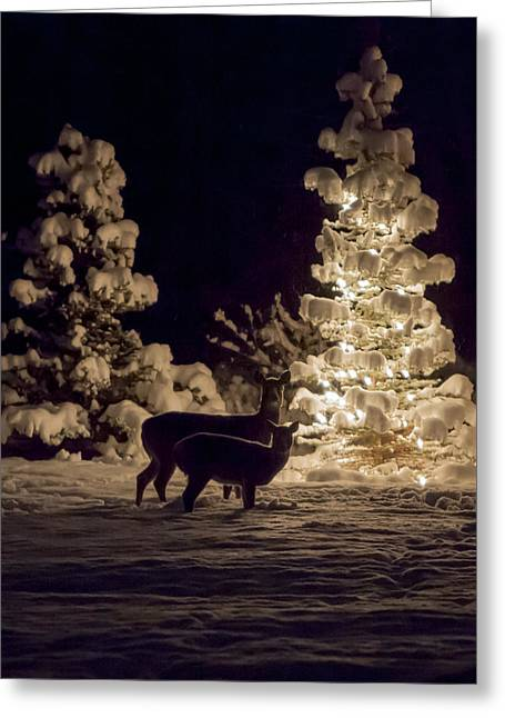 Greeting Card featuring the photograph Cautious by Aaron Aldrich
