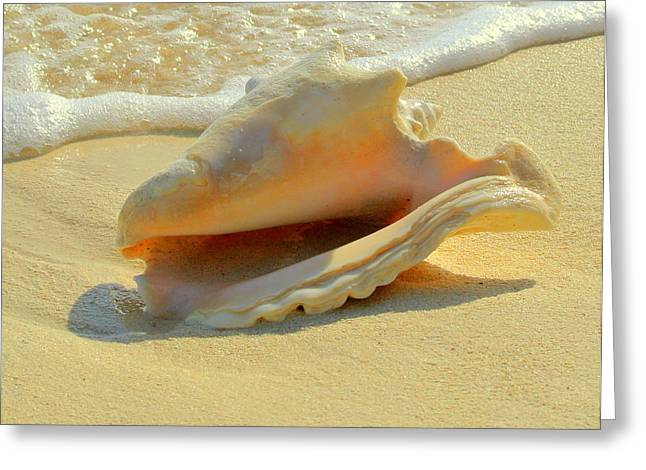 Cayman Conch #1 Greeting Card