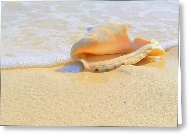 Cayman Conch #2 Greeting Card
