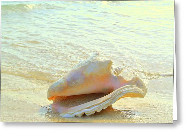Cayman Conch #3 Greeting Card