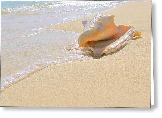 Cayman Conch #4 Greeting Card