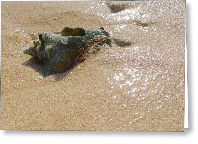 Cayman Conch #5 Greeting Card