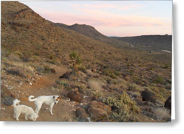 Ceaser, Mocha, And Chico In The Cerbat Mountains Greeting Card by James Welch
