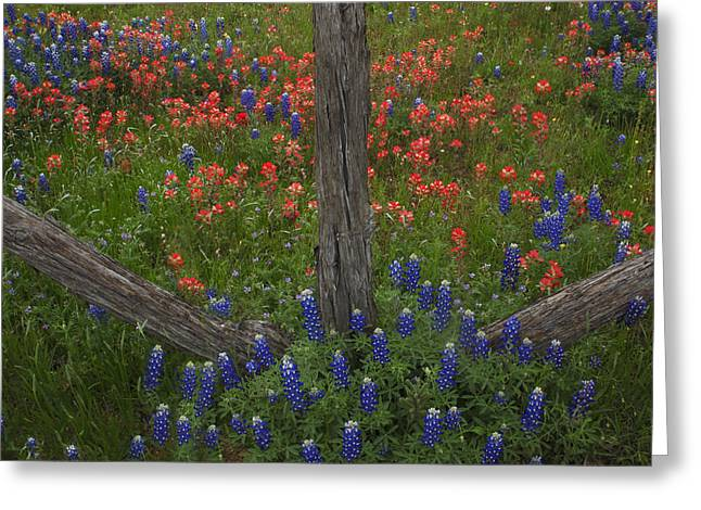 Cedar Fence In Llano Texas Greeting Card