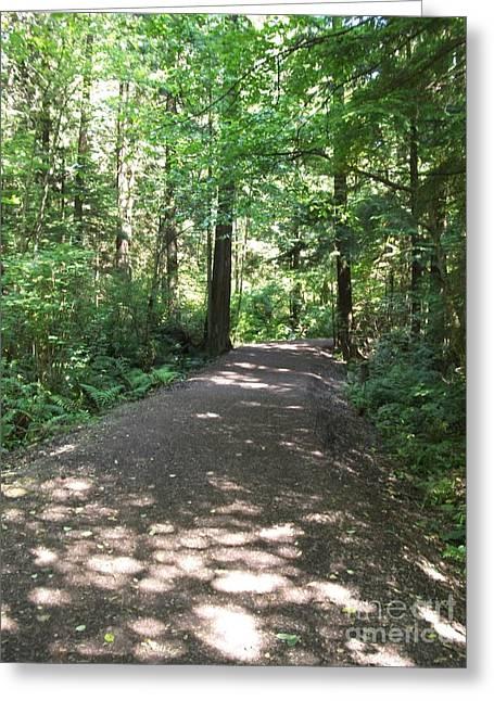 Cedar Shadow Steps Greeting Card by Kim Prowse