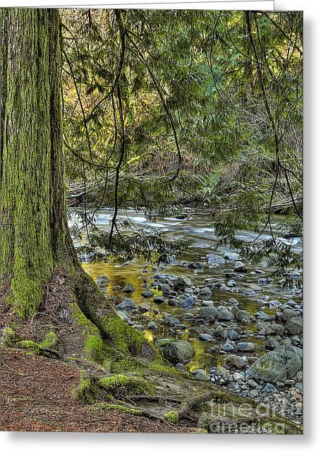 Cedar Tree By Kanaka Creek Greeting Card