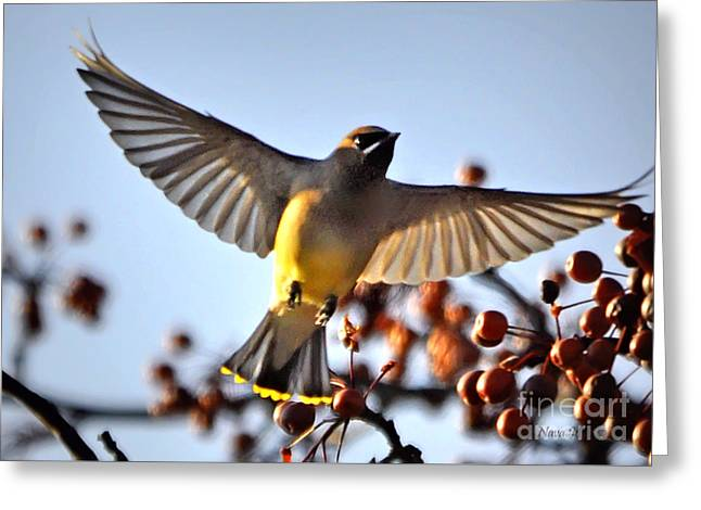 Cedar Waxwing Flight Greeting Card