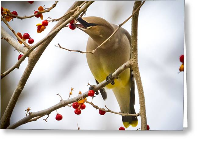 Greeting Card featuring the photograph Cedar Waxwing by Ricky L Jones
