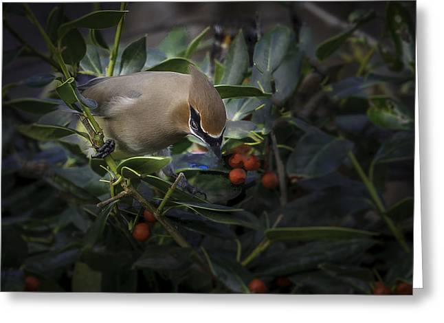 Cedar Waxwings  2012-2 Greeting Card