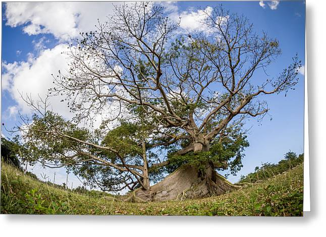 Ceiba Greeting Card by Carl Engman