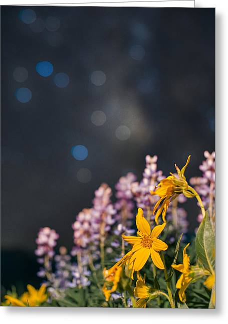 Celestial Boquet Greeting Card by Mike Berenson