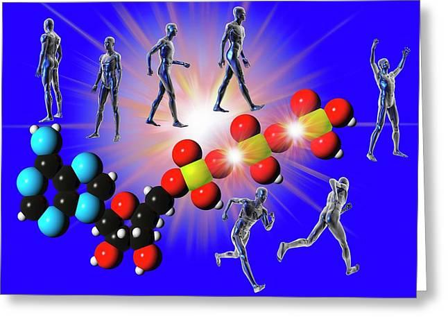 Cell Metabolism Greeting Card by Carol & Mike Werner