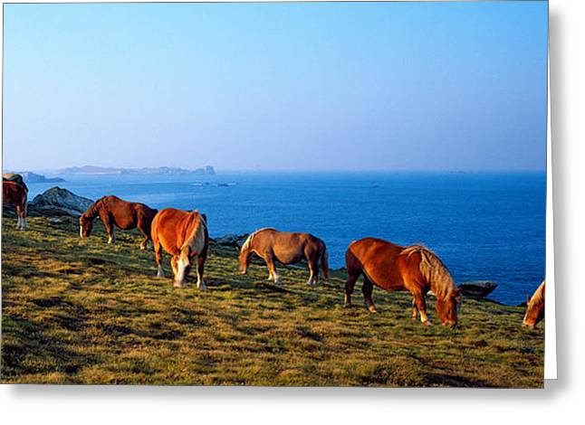 Celtic Horses Grazing At A Coast Greeting Card