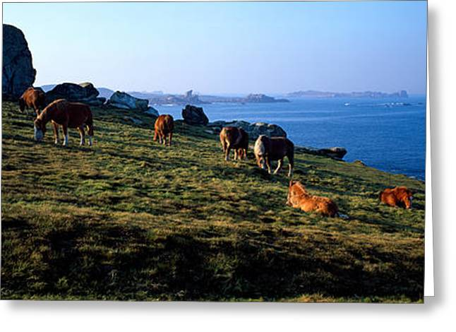 Celtic Horses Grazing In A Field Greeting Card by Panoramic Images