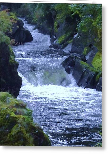 Greeting Card featuring the photograph Cenarth Falls by John Williams