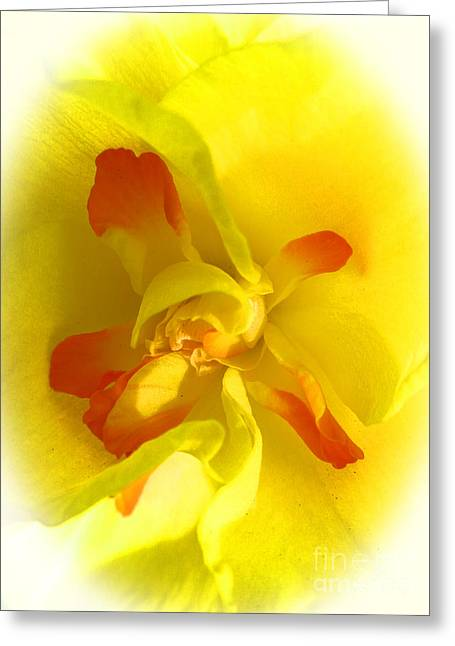 Center Daffodil Greeting Card by Tina M Wenger