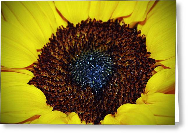 Center Of A Sunflower Greeting Card by Cynthia Guinn