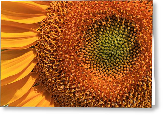 Center Of Attention Greeting Card by Donna Kennedy