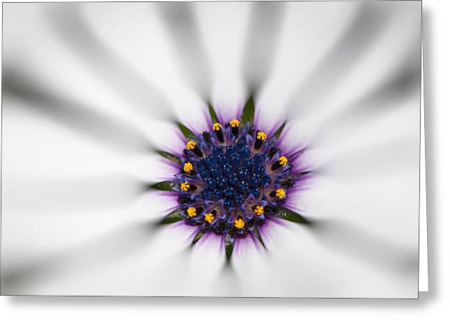 Center Of Life Greeting Card