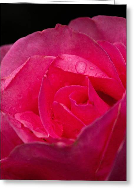 Greeting Card featuring the photograph Center Rose by Haren Images- Kriss Haren