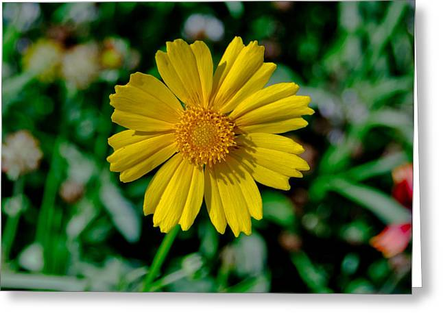 Centered Greeting Card by Kathi Isserman