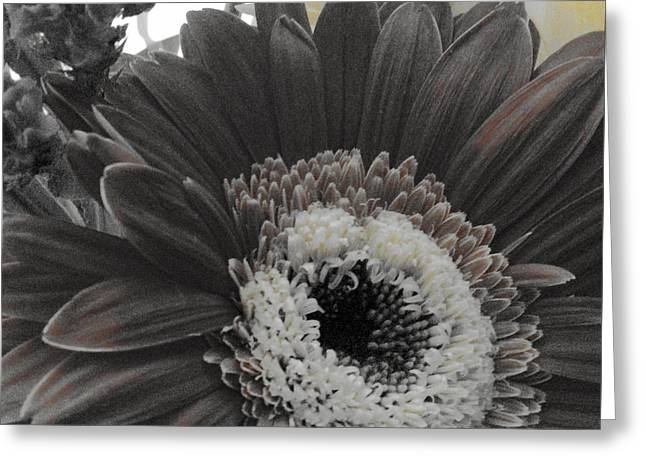 Greeting Card featuring the photograph Centerpiece by Photographic Arts And Design Studio