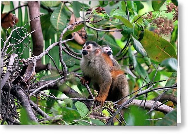 Central American Squirrel Monkeys Greeting Card by Susan Degginger