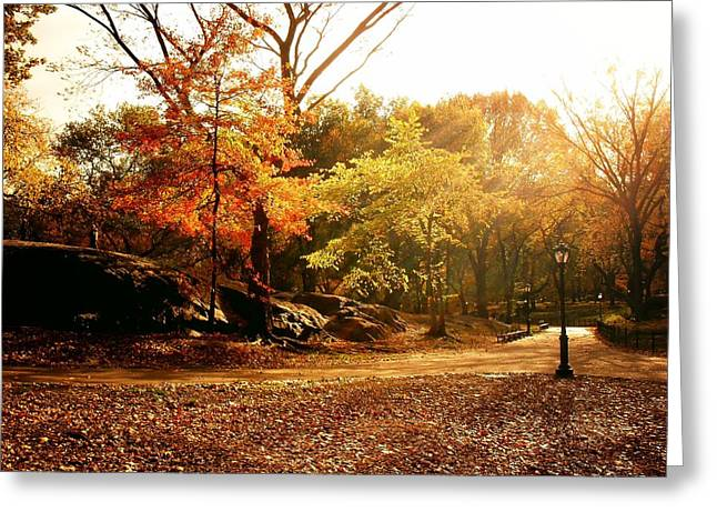 Central Park Autumn Trees In Sunlight Greeting Card