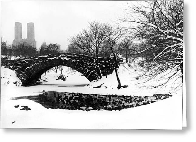 Central Park Duck Pond Greeting Card by Underwood Archives