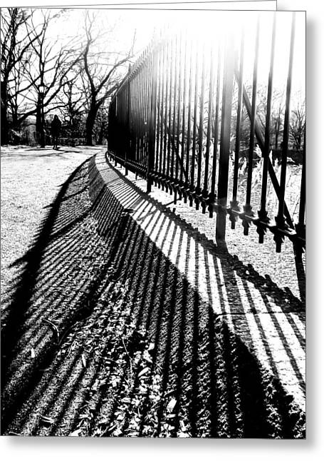 Central Park In The Winter Sun Greeting Card