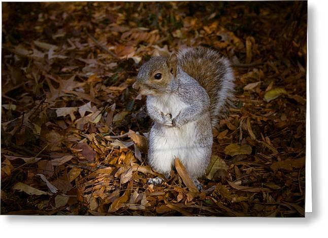 Central Park Squirrel Greeting Card by Marta Grabska-Press
