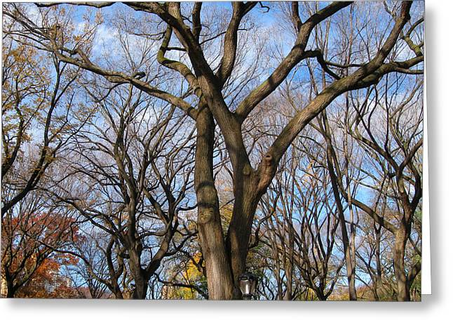 Central Park Trees Greeting Card