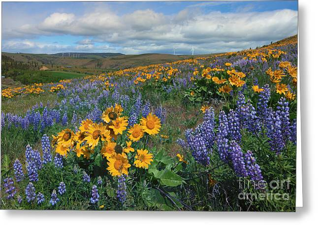 Central Washington Spring Greeting Card by Mike  Dawson