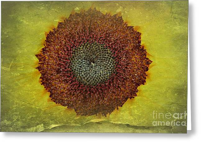 Centre Of The Universe Greeting Card by Clare Bevan