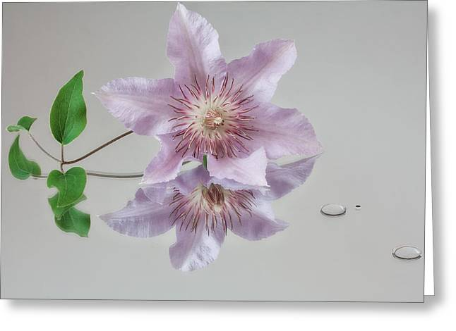 Centre Stage Greeting Card by Shirley Mitchell