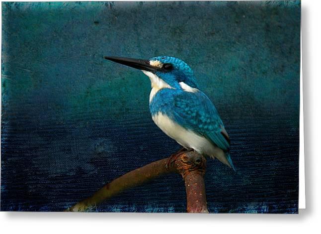 Cerulean Kingfisher Blue Alcedo Coerulescens Greeting Card
