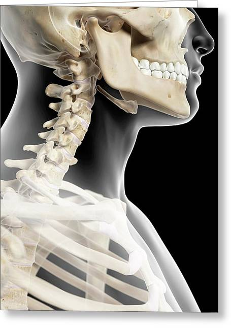 Cervical Spine Greeting Card by Sciepro