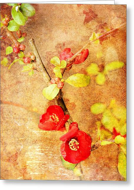 Chaenomeles Greeting Card