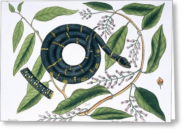 Chain Snake Greeting Card