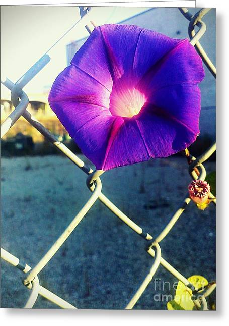 Greeting Card featuring the photograph Chained Splendor by James Aiken