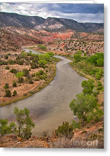 Chama River Greeting Card by Pat Lucas