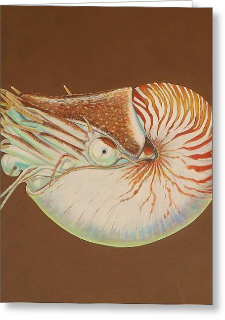 Chambered Nautilus Greeting Card by Bonnie Golden