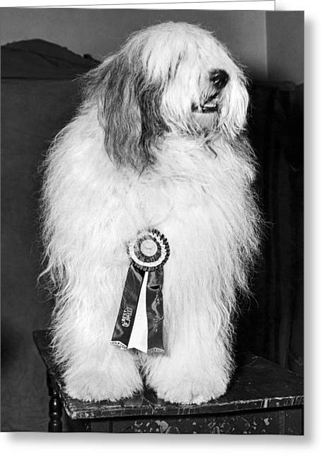 Champion Sheepdog Greeting Card by Underwood Archives