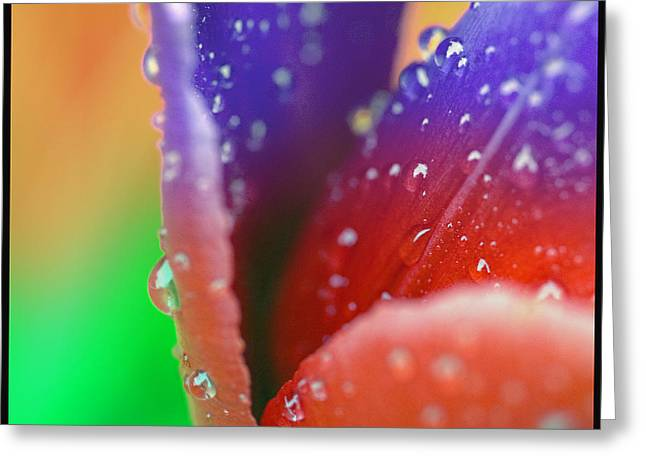 Changing Color Greeting Card by Robert Culver