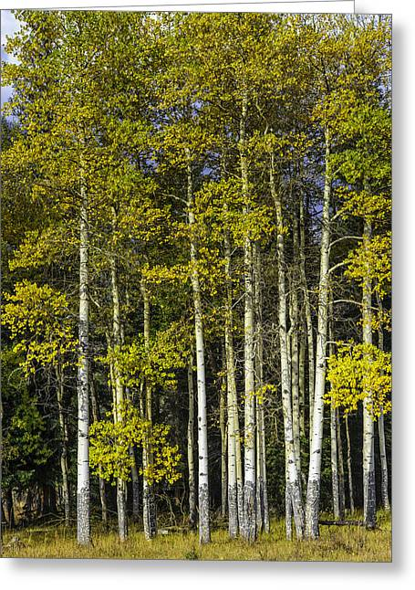 Changing Colors Greeting Card by Tom Wilbert