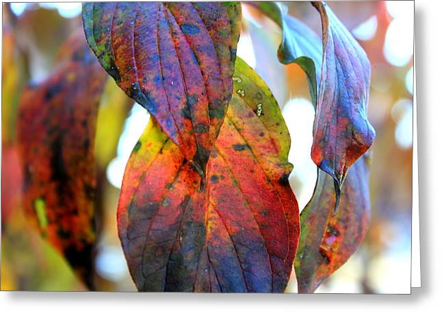 Changing Leaves Greeting Card by Dorothy Hall