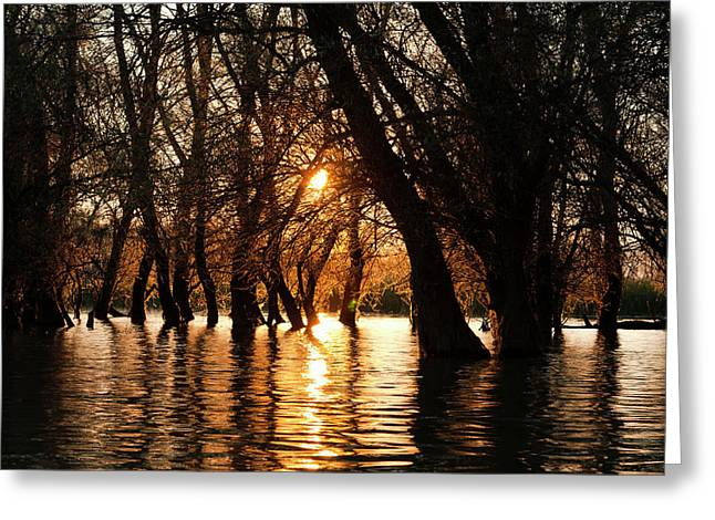 Channels During Sunrise In The Danube Greeting Card by Martin Zwick