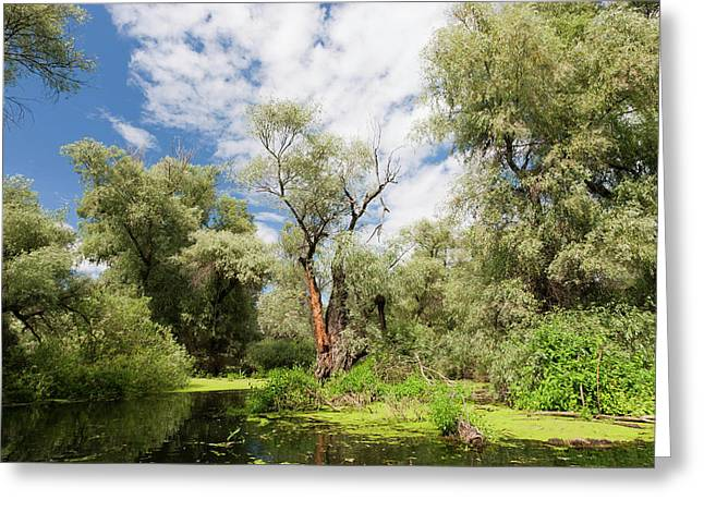 Channels In The Danube Delta, Romania Greeting Card by Martin Zwick