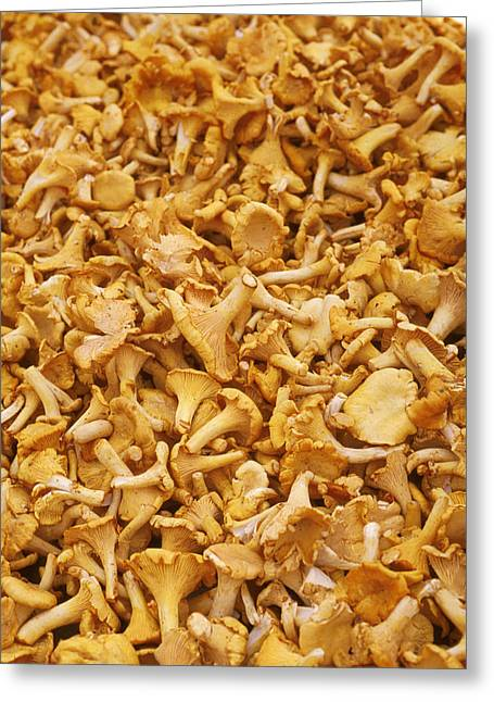 Chanterelle Mushroom Greeting Card by Anonymous