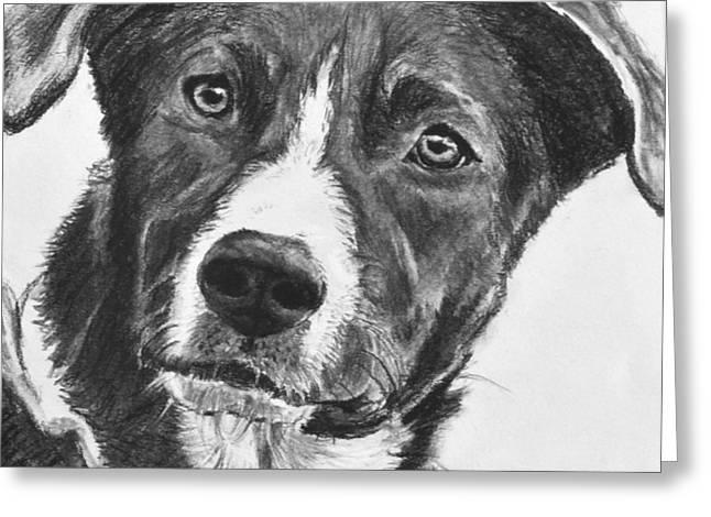 Charcoal Dog Shepherd Greeting Card